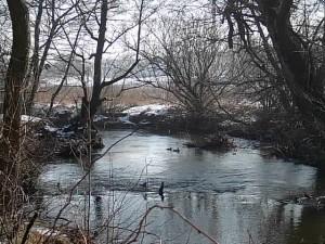 rzeka Reda późną jesienią
