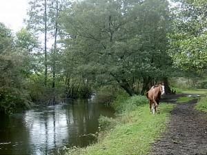 rzeka Reda obok niej znajuje się stadnina koni