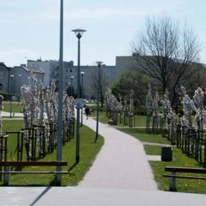 Wiosna w Miejskim Parku Rodzinnym w Redzie